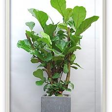 떡갈나무(특대/고급목)